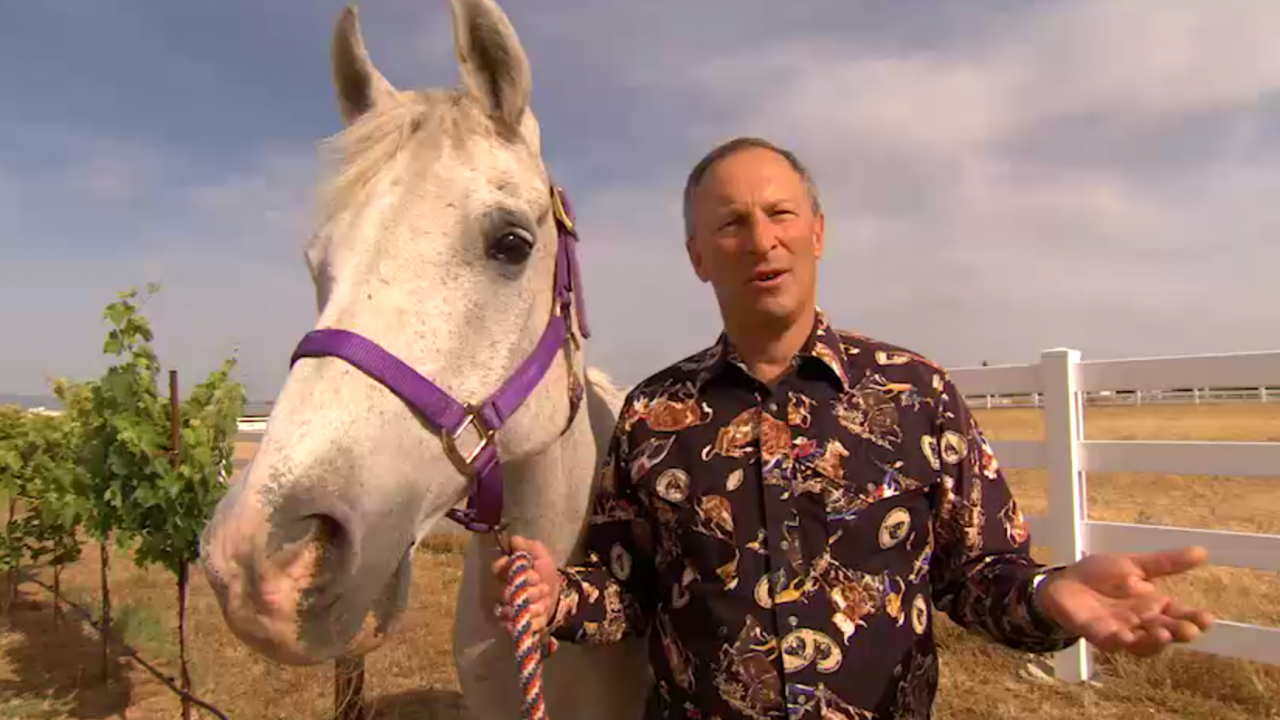 UC Davis Provost Ralph Hexter standing in a vineyard next to a white horse