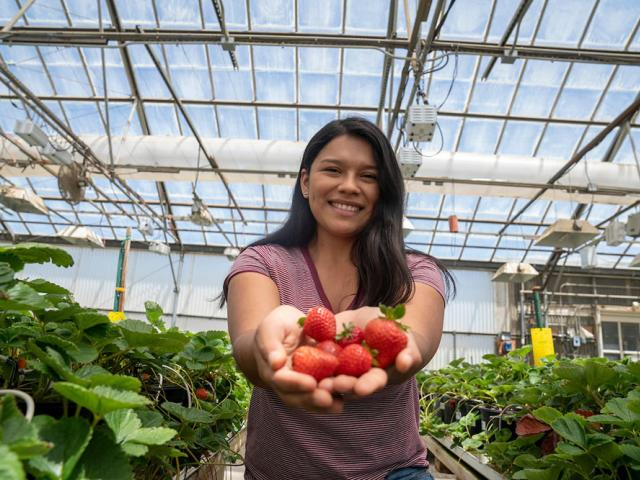 A UC Davis Student with a handful of strawberries
